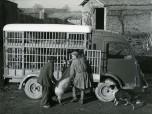 Renault Voltigeur 1000 kg cochonnière 1952